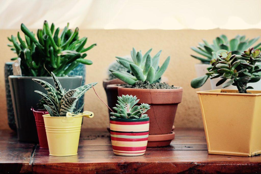 fat-plants