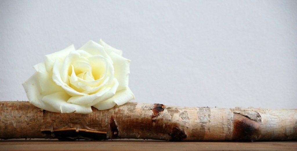 nature-roses