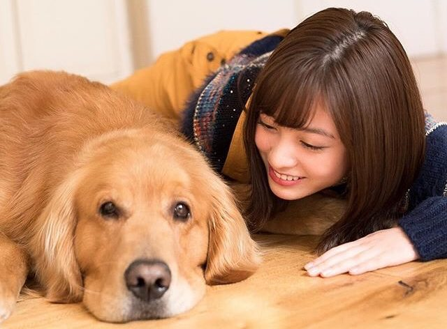 橋本環奈と犬